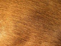De huid van herten Stock Foto
