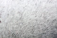 De Huid van het paard Royalty-vrije Stock Afbeeldingen