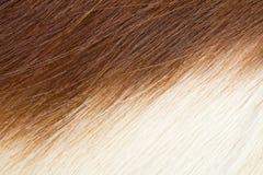 De huid van Springbuck Stock Foto