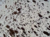 De huid van Texas longhorn Royalty-vrije Stock Afbeelding