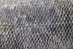 De huid van vissen Royalty-vrije Stock Foto