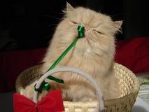 De Huidige Kat van Kerstmis Royalty-vrije Stock Foto's