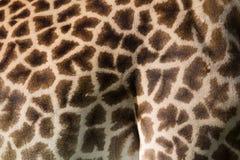 De huidpatroon van de giraf Stock Foto