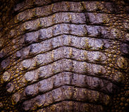 De huidtextuur van de krokodil royalty-vrije stock foto