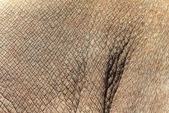 De huidtextuur van de rinoceros royalty-vrije stock afbeeldingen