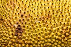 De huidtextuur van Jackfruit Royalty-vrije Stock Foto