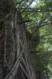 De huisboom beklimt oude plaats van klimop de groene vontage Stock Foto's