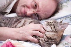 De huisdieren van de mens een Schots-Rechte grijze kat royalty-vrije stock afbeelding