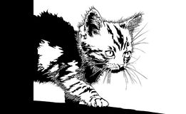 De huisdieren van de kunstdieren van de katjesillustratie stock afbeelding