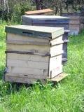De huizen van bijen Stock Afbeeldingen