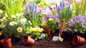 De hulpmiddelen en de bloemen van de tuin Het tuinieren concept stock videobeelden