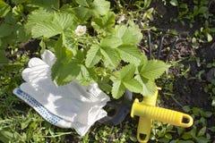 De hulpmiddelen van de tuin en wilde aardbei Stock Foto's