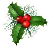 De Hulst van Kerstmis Royalty-vrije Stock Foto's