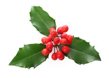 De Hulst van Kerstmis Stock Afbeeldingen