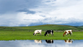 De Hulunbuir grässlättarna Royaltyfri Foto