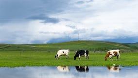 De Hulunbuir-Weiden Royalty-vrije Stock Foto