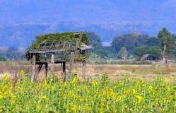 De hut van de ruïne met zonnebloem Stock Foto's
