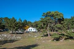 De hut van de houtvester onder eeuwbomen tegen de blauwe hemel royalty-vrije stock foto's