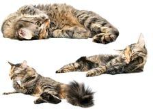 De Hutspot van de kat royalty-vrije stock foto