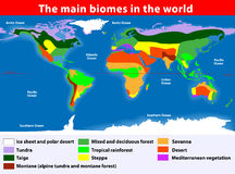 De huvudsakliga biomesna i världen Royaltyfria Bilder