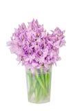 De hyacint van het Urplewater Royalty-vrije Stock Foto's