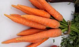 De Hybride wortel van Pusanayanjyoti stock afbeeldingen