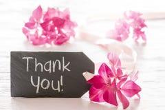 De hydrangea hortensiabloesem, Wit dankt u Stock Afbeelding