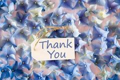 De hydrangea hortensiavlakte legt, dankt de Tekst u Stock Afbeelding