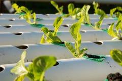De hydrocultuur Organische hydroponic groente in cultuurlandbouwbedrijf Stock Foto's