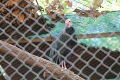 De Ibissen van de ooievaarsvogel Royalty-vrije Stock Foto