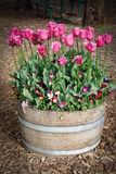 De Ideeën van de Tuin van tulpen in Vat Royalty-vrije Stock Foto