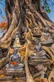 De idolen van Boedha in grote boom Stock Afbeeldingen
