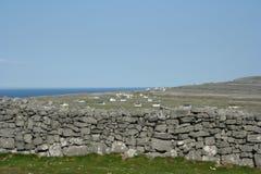 De Ierse muren van de Steen Stock Afbeeldingen