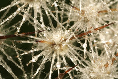 De ijskegels van het glas met dalingen van water Royalty-vrije Stock Afbeeldingen