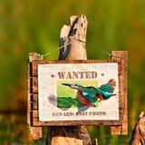 De ijsvogel valt zijn foto op het teken aan stock foto