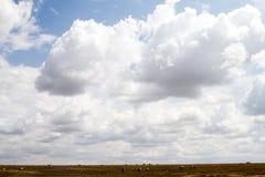 De ijver verblindt binnen van zebras in Serengeti, Tanzania royalty-vrije stock fotografie