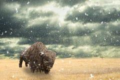 De ijzerbuffels van ijzer worden gemaakt danken het lopen in droge prairie met dalende sneeuw die af Open duidelijk landschap met royalty-vrije stock foto's