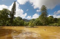 De ijzerhoudende warm waterlente in Sao Miguel, de Azoren portugal Royalty-vrije Stock Afbeelding