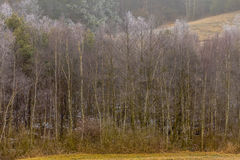 De ijzige heuvelige gebieden van de plattelandsmening met bomen Stock Afbeelding