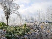 De ijzige Scène van de Winter Royalty-vrije Stock Fotografie