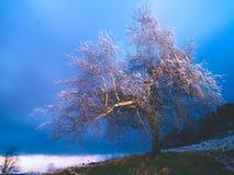 De ijzige slingering van boomtakken in vorstwind bij nacht Shinningsijs op takjes, op de takken, stock fotografie