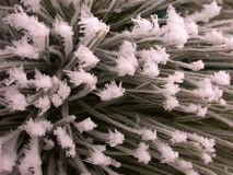 De ijzige Textuur van de Pijnboom Stock Afbeeldingen
