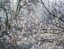 De ijzige winter in sneeuw bos, bevroren boomtakken Vage achtergrond van de winter Stock Foto