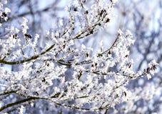 De ijzige winter in sneeuw bos, bevroren boomtakken Vage achtergrond van de winter Royalty-vrije Stock Fotografie