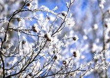 De ijzige winter in sneeuw bos, bevroren boomtakken Vage achtergrond van de winter Stock Afbeelding