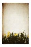 De illustratie van bloemen op oude grungeachtergrond Royalty-vrije Stock Foto's