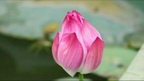 De illustratie van de bloemZen van Lotus Royalty-vrije Stock Foto