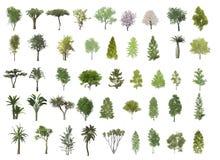 De illustratie van bomen Stock Foto