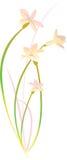 De Illustratie van de bloem Stock Fotografie