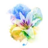 De illustratie van de bloemwaterverf Royalty-vrije Stock Fotografie